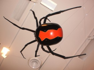 A Giant Red Back Spider